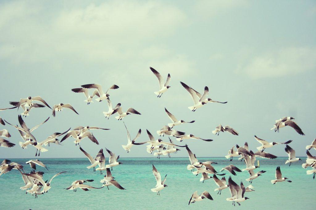 seagulls, beach, gulls